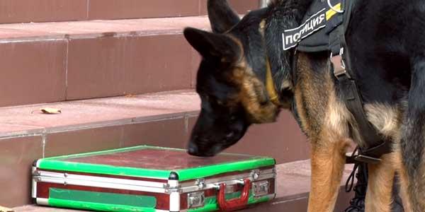 Подозрительный чемоданчик. К дзержинскому МФЦ прибыли подразделения МЧС, полиция, скорая помощь