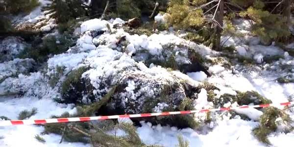 Мертвые лошади. Страшная находка в лесополосе Дзержинска